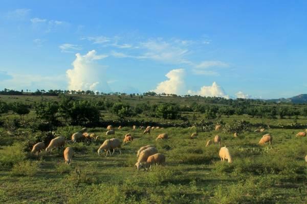 Đồng cừu Sơn Hải - một trong những bối cảnh chính của phim Dấu chân du mục - sẽ khiến bạn như đang lạc vào thảo nguyên Mông Cổ.