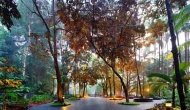 Rung-mua-nguyen-sinh-giua-long-Singapore-ivivu-1