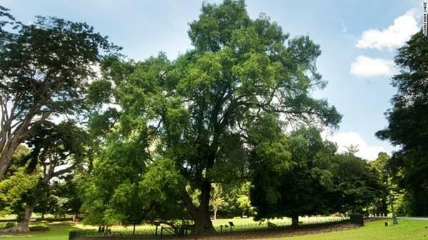 Vườn có 47 cây di sản, trong đó có cây Tembusu đã hơn 200 năm tuổi. Bạn có thể thấy hình ảnh của cây này trên đồng 5 đôla của Singapore.