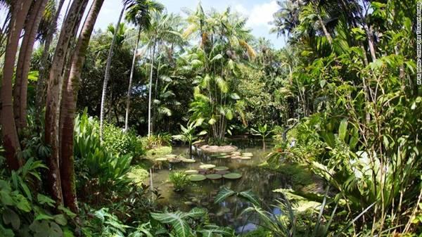 Vườn thực vật có một khoảng rừng mưa nguyên sinh độc đáo. Toàn thế giới chỉ có Singapore và Rio de Janeiro là hai thành phố có rừng nguyên sinh trong địa phận. Các nhân viên cho biết khu rừng này đã hàng triệu năm tuổi, gợi nhắc về những loài cây từng bao phủ đảo quốc sư tử.