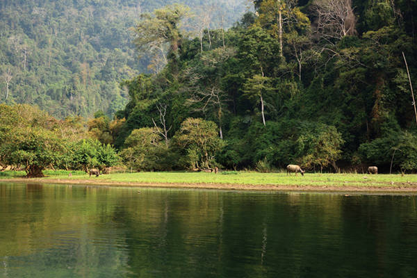 Mùa thu cảnh sắc hồ Ba Bể đẹp như một bức tranh thủy mặc