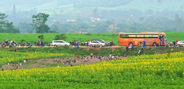 Có diện tích lên đến 60 ha, ngay từ đầu đường Hồ Chí Minh địa phận tỉnh Nghệ An, du khách đã có thể chiêm ngưỡng một phần cánh đồng hoa rộng mênh mông.