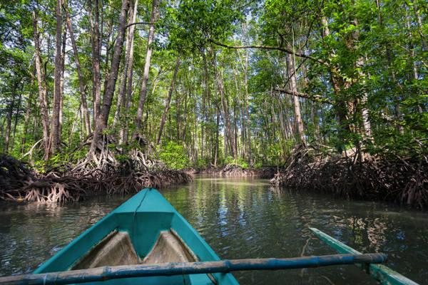 Sông Sabang: Du thuyền dọc theo sông Sabang bạn có thể khám phá những khu rừng ngập mặn từ nhiều thế kỷ với nhiều loại động thực vật đa dạng.