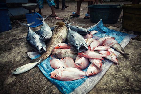 Thưởng thức hải sản ở Sabang: Ngoài là cổng chính để vào Vườn quốc gia sông ngầm Puerto Princesa, ngôi làng nhỏ Sabang còn là nơi bạn có thể thưởng thức nhiều món hải sản tươi ngon.