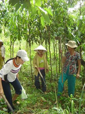 Đồng bào dân tộc Kor trồng quế dưới chân Cà Đam - Ảnh: V.Q.Cầu