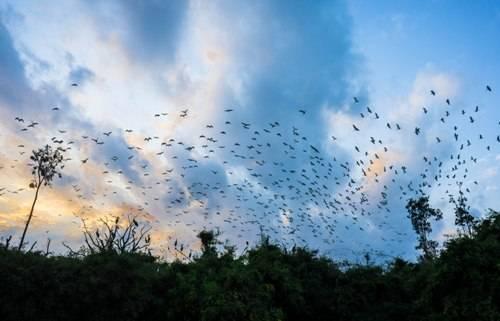 Tháng 9 đến tháng 4 năm sau là thời gian cò, vạc làm tổ. Du khách có thể tận mắt chứng kiến những cánh cò trắng muốt hay cò con mới ra đời với đôi chân còn run rẩy. Ảnh: Diệu Huyền