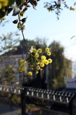 Trong nắng mai trên phố - Ảnh: Trân Duy