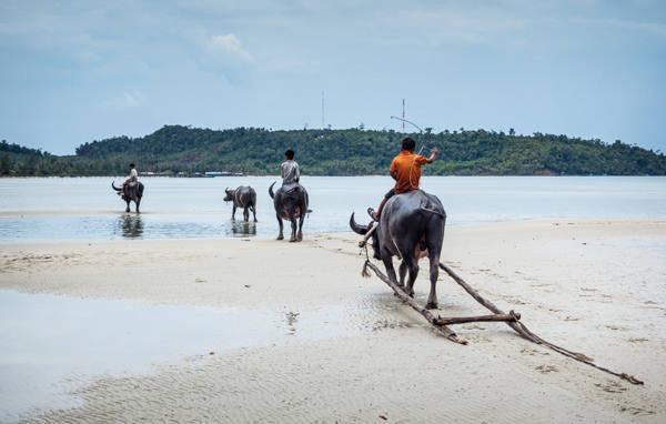 Description: Ở trên đảo, bạn sẽ dễ dàng bắt gặp hình ảnh những chú bé cưỡi trâu dạo dọc bãi biển. Ảnh: Colleen Slater