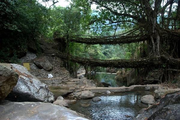 15. Người dân ở làng Meghalaya, Ấn Độ, tạo những cây cầu đặc biệt bắc qua sông suối bằng cách bện rễ cây đa dai quanh thân cau hoặc tre. Một số cây cầu ở đây có thể đã tồn tại hơn 500 năm. Ảnh: Vinayak Hegde