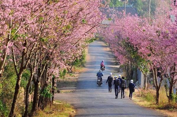 Một con đường hoa đẹp ở Đà Lạt. Ảnh: Đà Lạt trong tôi