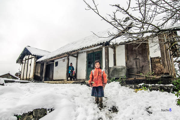 Ngắm tuyết:Bởi tuyết là một khái niệm quá đỗi… xa vời ở Việt Nam, thế nên, ai đến Sapa mùa đông cũng mang trong mình một… giấc mơ tuyết trắng. Ai cũng muốn được một lần ngắm tuyết mà chẳng phải đi Pháp, đi Anh. Ai cũng muốn được vo tròn từng cục tuyết trong tay rồi ném nhau như lũ trẻ nước ngoài. Ai cũng mong được nhìn những hạt tuyết rơi đậu trên lá cây, trên mái nhà, tựa như trong một bộ phim Hàn Quốc được quay vào mùa đông. Một mong mỏi rất đỗi trong sáng, hồn nhiên và… hoàn toàn có thể được thỏa mãn khi đến thăm Sapa vào những ngày lạnh nhất.