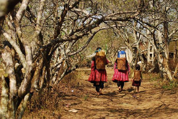 Bản Tả Phìn: Bản Tả Phìn là nơi sinh sống chủ yếu của người dân tộc Dao đỏ và cả người H'Mông, nằm ven thị trấn Sa Pa. Con đường vào bản Tả Phìn men theo sườn núi quanh co bên những thửa ruộng bậc thang xanh mượt. Những cây đào, cây mận ven đường nở những chùm hoa rực rỡ trong cái rét miền sơn cước như đón chào du khách. Ảnh: Ngaymua