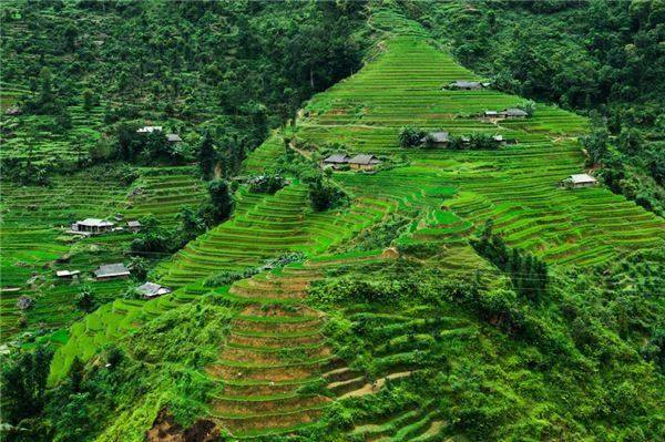 Khung cảnh bao la xanh mướt của những thửa ruộng bậc thang trải đều tít tắp ở Hoàng Su Phì.