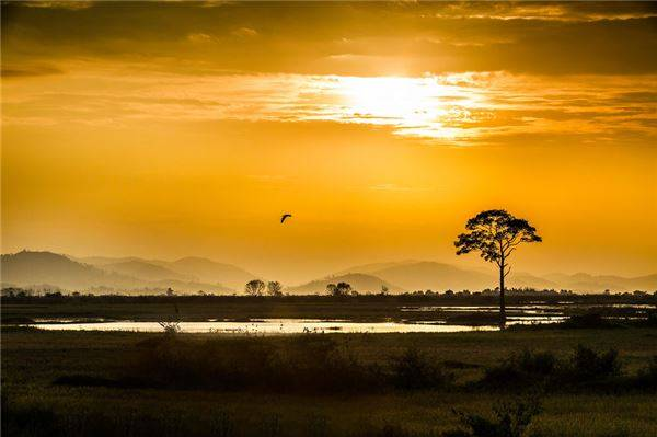 Khung cảnh lãng mạn ở Buôn Ma Thuột – vùng đất được mệnh danh là thủ phủ của cây cà phê.