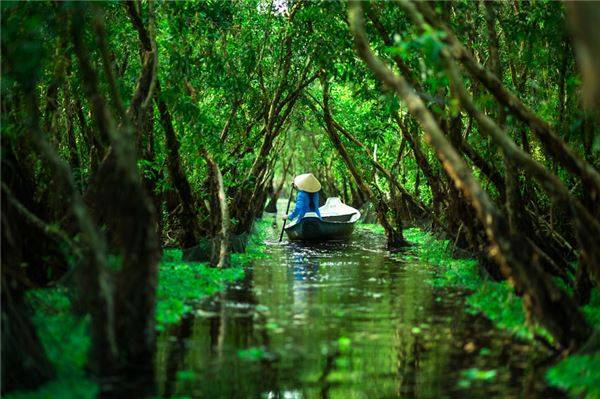 Khung cảnh xanh mướt ở rừng tràm Trà Sư.