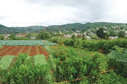 Pindaya nằm giữa vùng cao nguyên đất đỏ xinh đẹp