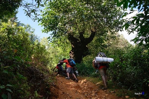Để đến được chân núi và bắt đầu cuộc hành trình, chúng tôi phải trải qua một con đường khá vất vả. Khi chênh vênh bên bờ vực, lúc khác lại đâm xuyên khu rừng rậm rạp. Lối đi càng vào sâu càng dốc đứng mà nhỏ hẹp. Chúng tôi dường như cảm nhận rõ hơi thở của núi rừng.