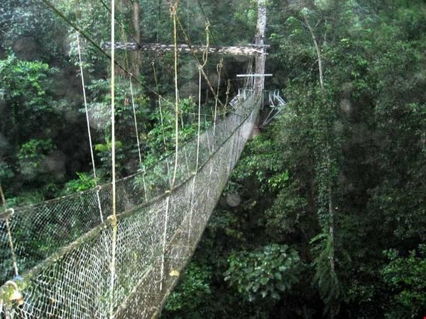 Vườn quốc gia Gunung Mulu không chỉ nổi bật với những kỳ tích dưới lòng đất, mà còn mang vẻ đẹp miên man của núi rừng nhiệt đới nguyên sơ với hệ động thực vật rất phong phú và đa dạng. Ảnh: thebaldgourmet.