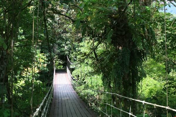 Vườn quốc gia Gunung Mulu là nơi sinh trưởng của hơn 4.000 loài nấm, 1.700 loài rêu, 3.500 loại cây. Ảnh: fatgirldoestheworld.