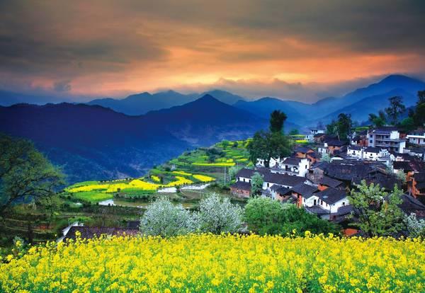 Làng Wuyuan ở Giang Tây, Trung Quốc nổi tiếng với những ngôi nhà cổ có kiến trúc độc đáo chen lẫn trong sắc hoa cải rực rỡ. Ảnh: blog.liveitchina.com