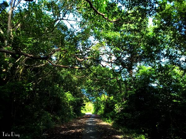 Qua bãi Ngự là đường lên hải đăng Nam Du. Con đường rợp bóng cây xanh với những dốc đứng phải để xe số 1 mới có thể chạy lên nổi.