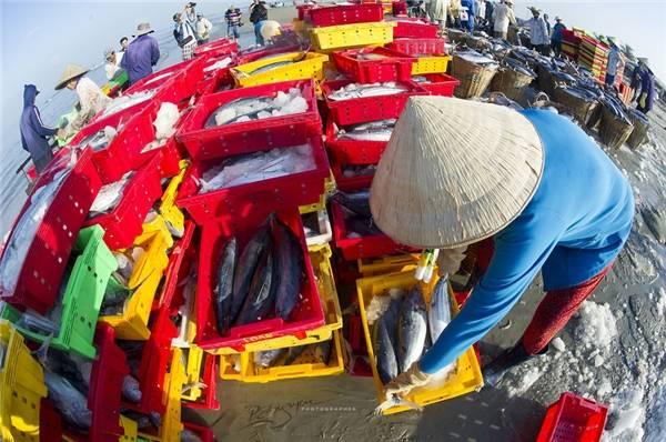Từ sáng sớm, những chiếc thuyền trở về sau chuyến đánh bắt dài gần 1 ngày cùng hàng trăm tấn cá và hải sản. (Ảnh: Nguyễn Vũ Phước)