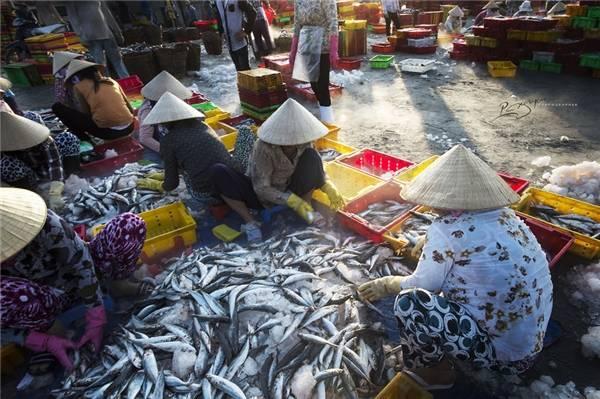Cảng cá Long Hải là nguồn cung cấp hải sản chính của khu vực lân cận, trong đó có thành phố Hồ Chí Minh. (Ảnh: Nguyễn Vũ Phước)