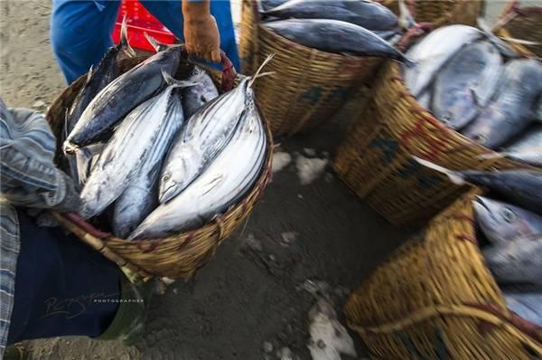 Khác với trước đây, bây giờ, người ta có thể mua hải sản bất cứ lúc nào mà không cần phải đợi tàu đánh cá cập bến bởi họ thuê ngư dân mang hải sản vào bờ trên những chiếc xuồng gỗ. (Ảnh: Nguyễn Vũ Phước)