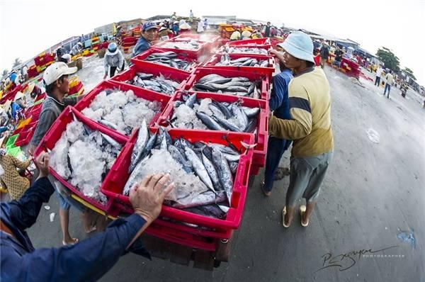 Sau đó, chủ vựa sẽ kiểm tra trọng lượng và phân phối công nhân chất lên xe tải giao hàng. (Ảnh: Nguyễn Vũ Phước)