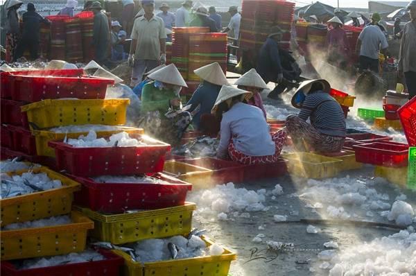 Mọi người ở cảng cá Long Hải phối hợp với nhau rất nhịp nhàng và có trật tự. (Ảnh: Nguyễn Vũ Phước)