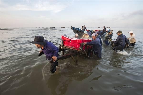 Để kéo cá vào bờ, cần 5 đến 6 người đàn ông khỏe mạnh. (Ảnh: Nguyễn Vũ Phước)
