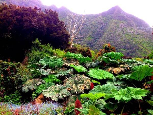 Hệ sinh thái trên đảo Robinson Crusoe - Ảnh: leeabbamonte