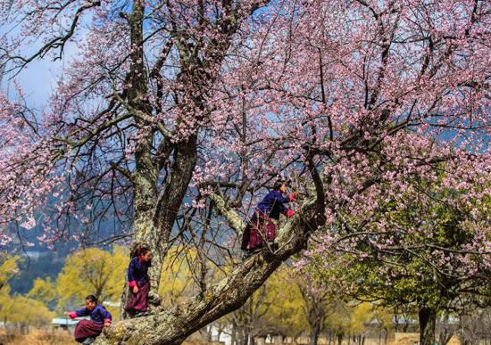 Cảnh thanh bình đất nước Bhutan. Ảnh: Nguyễn Thanh Hải