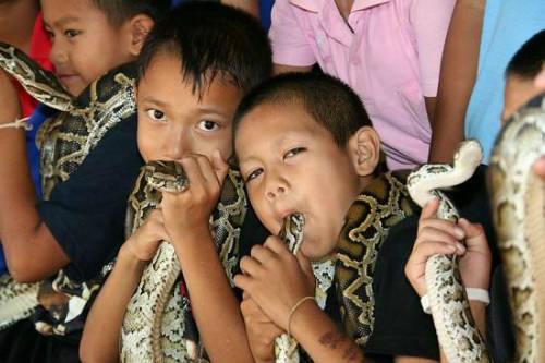 Du khách đến với làng cho biết, họ vừa thích thú lại vừa lo lắng khi xem các buổi biểu diễn giữa người và rắn. Ảnh: Odd.