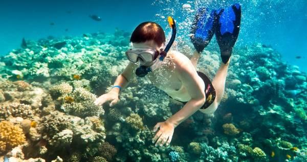 Lặn biển ngắm san hô ở Phú Quốc. Ảnh: dulichphuquocvt.com