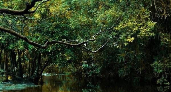 Bí ẩn những khu rừng nguyên sinh Phú Quốc - Ảnh: Nguyễn Thế Bảo