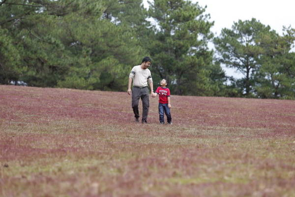 Du khách đi trên đồi cỏ hồng