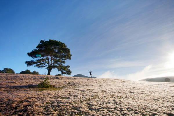 Làn cỏ mềm như nhung tạo điều kiện cho sương đọng dày trông như tuyết