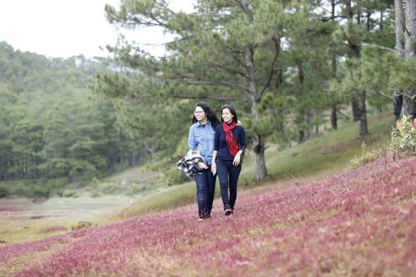 Du khách đến sau khi sương tan để chụp với cỏ hồng nguyên bản
