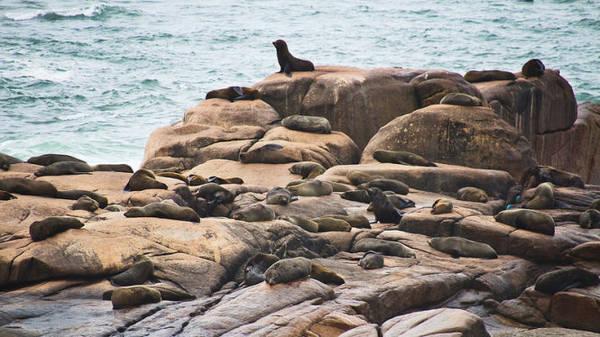 Những con sư tử biển phơi mình trên các tảng đá - Ảnh: flickr