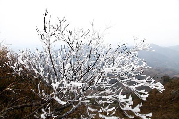 Băng tuyết kết thành chùm trên cành cây ở Mẫu Sơn. Ảnh: diendanbactrungnam
