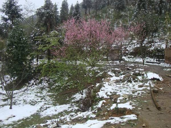 Tuyết rơi tại Tây Côn Lĩnh. Ảnh: Thanh Phong