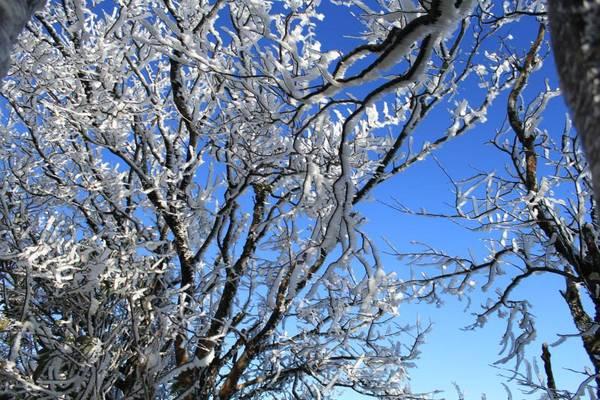 Những cành cây khẳng khiu phủ đầy băng tuyết trắng xóa ở Phia Oắc. Ảnh: Hoàng Dung
