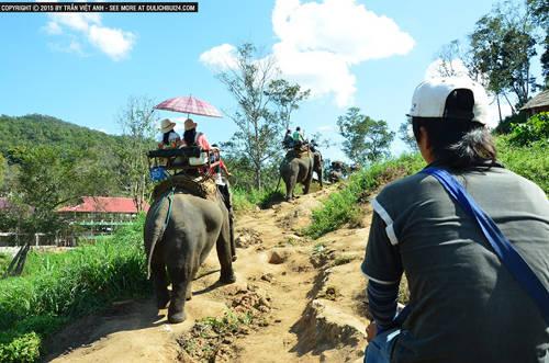 Du khách cưỡi voi ở Chiang Mai.