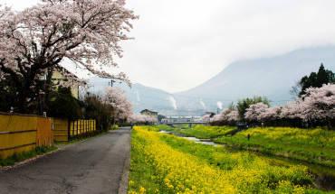 Yufuin ngập tràn sắc hoa vào ngày xuân. Ảnh: Tsukaretab