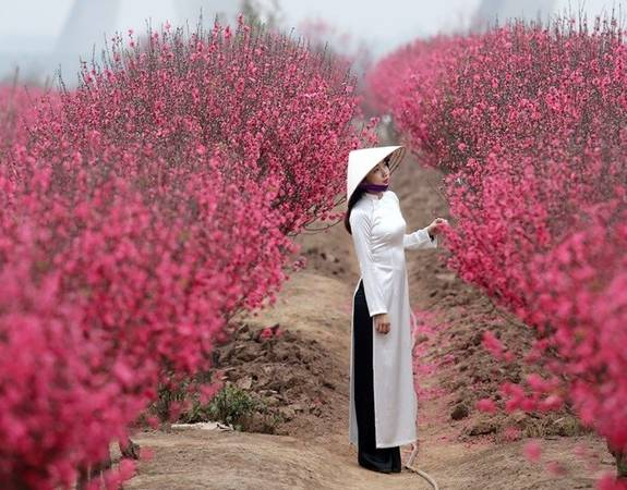 Hoa đào có màu đỏ hồng rực rỡ. Ảnh: Vũ Minh Quân/Zing.