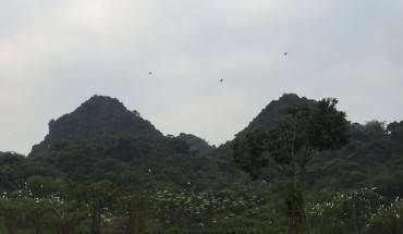 Thung-Nham--noi-hang-nghin-canh-chim-tru-ngu-ivivu-1