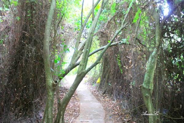 Cách thành phố Cao Lãnh 30 km, thuộc địa phận 2 xã Hiệp Mỹ và Mỹ Long của huyện Cao Lãnh, với diện tích 50 ha, trong đó có 20 ha rừng tràm, căn cứ địa một thời - Xẻo Quýt - hiện có khoảng 170 loài thực vật với 158 loài hoang dại và 12 loài cây thân gỗ. Hệ động vật có 200 loài hoang. Nơi đây có 13 loài động vật quý hiếm được ghi vào Sách đỏ Việt Nam như trăn mốc, rắn hổ trâu, rùa hộp, chim sả mỏ rộng và loài rái cá thường. Du khách có thể lựa chọn cách đi bộ theo những con đường xuyên rừng, hoặc ngắm cảnh trên những chiếc xuồng nhỏ, len lỏi qua những con lạch.