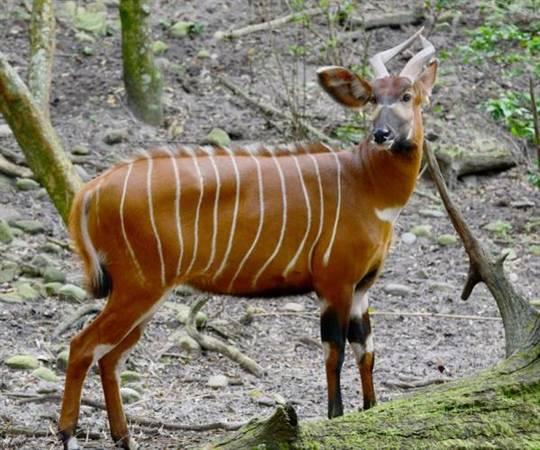 Tới đây du khách sẽ có cơ hội tiếp xúc với nhiều loài động vật quý ở cự ly gần. Ảnh: Vingroup