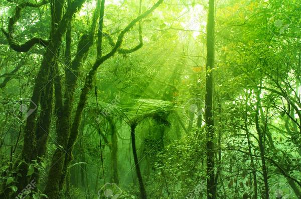 Cao nguyên Cameron là một trong những vùng đồi núi rộng lớn nhất Malaysia, và là một địa điểm du lịch có từ rất lâu đời. Cao nguyên Cameron nổi tiếng với những con đường mòn sẽ dẫn bạn đi qua những khoảnh rừng rộng lớn, đến các thác nước và các điểm đến yên tĩnh khác. Ảnh:123rf.com